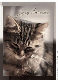Carte Joyeux anniversaire petit chat gris pour envoyer par La Poste, sur Merci-Facteur !