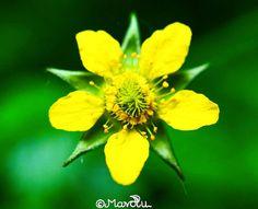 Macrophoto of a flower    #nature #natur  #naturelove #naturelovers #sonyalpha68 #depthoffield  #sonya68 #environment #umwelt #Umweltschutz #sonyalpha #protectthenature #macro #macrophotography #natureart #photography #picoftheday #flower #blume #blossom #blooming  #naturephotography #macrophoto #macropic by mavolu_photography