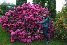 Can't remember the exact castle garden I found these flowers in but look at them Pink is the way to go. from a year ago. And yes those are gloves. May is chilly in Scotland. A Year Ago, Scotland Travel, No Way, Bookstagram, Pink Flowers, Gloves, Castle, Wanderlust, Europe