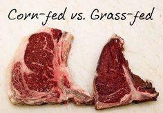 corn fed vs grass fed t-bone