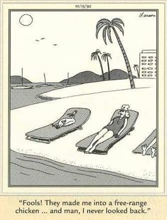 The Far Side by Gary Larson.sometimes it's wiser to stay indoors and live in the bath.what possibly could go wrong. Far Side Cartoons, Far Side Comics, Good Cartoons, Funny Cartoons, Funny Comics, Cartoon Chicken, Chicken Humor, Gary Larson Far Side, Gary Larson Cartoons