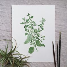 Happy to have finished this Lemon Balm piece this morning to add to my Essential Herbs series. The print version will be added to my shop soon!
