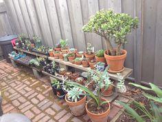 Our succulent garden