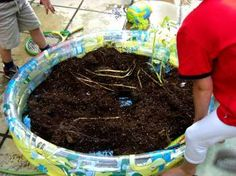 PADDLING FOR POTATOES: Great idea from a Nottingham childminder to help children get the most out of harvesting their potatoes - tipping the grow bags into a paddling pool and allowing lots of play with mini diggers to find the yummy spuds.