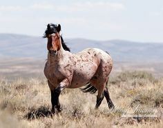 The Red Roan Stallion by WildHoofbeats on Etsy, $35.00