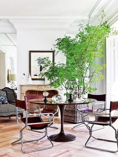 An indoor tree can help to split an open layout into two spaces. In this room, the tree just touches the ceiling, its height breaking up the dining room and sitting area and adding a casual, natural touch to complement the sleek, sophisticated décor.