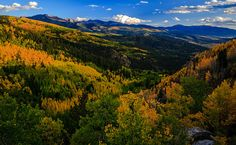 Aspens turning in the Sangre de Cristo mountains in Colorado.(Photo by Jeremy Elliott)