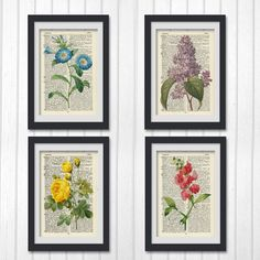 Dictionary botanical prints!