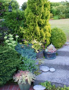 Sedum planters on steps with a golden Thuja | Flickr - Photo Sharing!