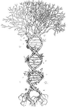 DNA Strand: anatomy and nature Spine.
