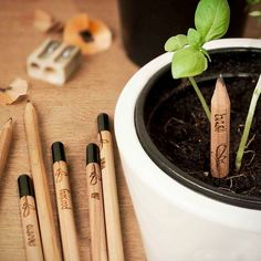 Ever tried to grow a pencil? Well, this isn't exactly a pencil tree, but it comes darn close. The eco-friendly Sprout Pencil has a seed capsule inside it. Pencil Plant, Mini Diy, Interior Simple, Diy Desktop, Pencil Trees, Herb Seeds, Green Gifts, Cutest Thing Ever, Sweetest Thing