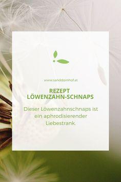 Der Löwenzahn hat aphrodisierende Wirkung. #löwenzahn #kräuter #löwenzahnrezepte #kräuterrezepte #aphrodisiakumnatürlich Tableware, Cough Remedies, Bitterness, Fried Cabbage Recipes, Schnapps, Nth Root, Dinnerware, Dishes
