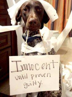 Www.brainmass.com the daily dog. #lawschool