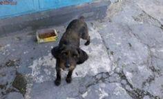 Poodle doente precisa de resgate na zona Leste de São Paulo