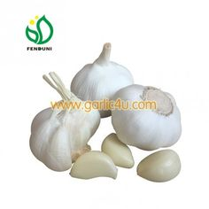 Pure white garlic is also named snow white garlic. Origin & Factory Location: Jinxiang County, Shandong, China. Own factory & 10 years experience! Standard: Grade A quality/EU standard How To Store Garlic, Shelf Life, Pure White, 10 Years, Bulbs, Hue, Snow White, China