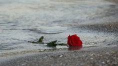 rose in sea - Google Search