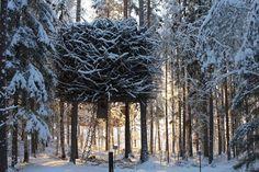 Treehouse Retreats - The Tree Hotel, Bird's Nest