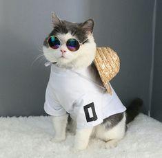 Bu sevimli kedi tatile çıkıyo anlaşılan