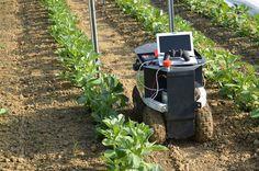 Les agriculteurs français ont un nouvel allié, un robot qui désherbe sans pesticide