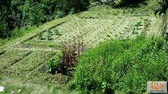 Orti delle Biodiversità Alpina