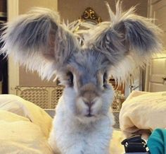 I....I feel like there's something funny I could say here but I'm just too damn mesmerize by this bunny's ears to think on it
