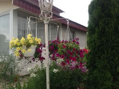 Мой сад 2014