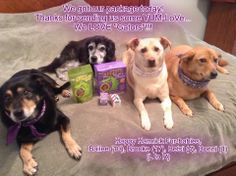 What else can we say? We are in love, love, love with this fan photo of four gorgeous dogs enjoying a photo opp with their treat prize pack.