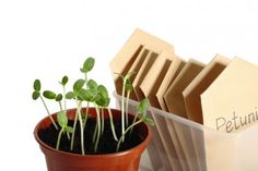 Colorado Public Library Adds a Seed Bank to Attract More Growers and Readers  by Tafline Laylin, 02/04/13