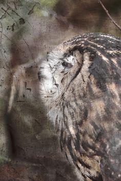 eagle-owl by Arek Uriasz
