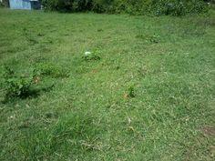 agricultural land for sale kenya