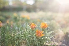 Fine Art Photography, Landscape PhotographyMarch 2, 2016 Spring + Morning Light By Kim Peterson