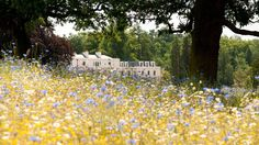 Image result for coworth park meadow