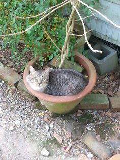 148 Cat-Plants You Probably Shouldn't Water My Flower, Flower Pots, Cat Plants, Rare Cats, Warm Bed, Owning A Cat, Perfect Plants, Cat Sleeping, Hibiscus