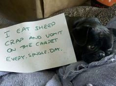 Check out more of these adorable criminals at dogshaming.tumbler.com !