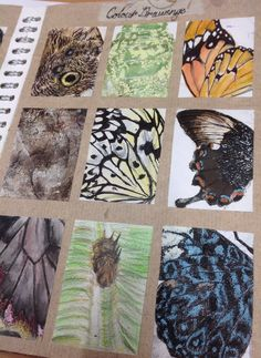Observational studies using different materials,pencil ink water colour charcoal etc