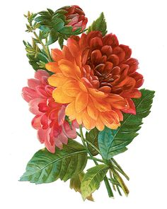 Delightful dahlias - Used it! http://papersquirrel.blogspot.com/2012/09/enjoy-it.html