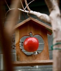 Bird Feeders Design, Pictures, Remodel, Decor and Ideas
