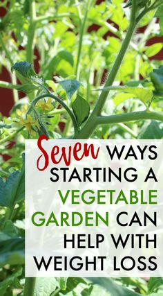 Would you believe that starting a vegetable garden could help you lose weight? Start a garden from scratch and learn to appreciate your food, get outside, and get a great workout at home.