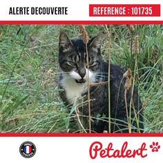 11.09.2016 / Chat / Agen / Lot-et-Garonne / France