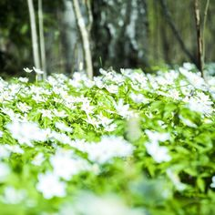 Spring is here! Go outside and enjoy it. #spring #summer #finland #helsinki #photography #photo #pics
