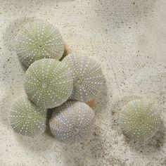 Seashell - Green Urchin - Coastal Inspired Wedding #shell