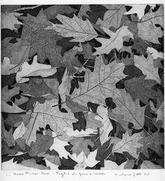 Bosco Pisani Dossi: foglie di quercia rossa