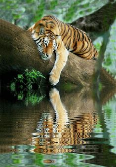 Top 10 Photos of Big Cats - Top Inspired Big Cats, Cats And Kittens, Cute Cats, Nature Animals, Animals And Pets, Animals In The Wild, Lazy Animals, Safari Animals, Beautiful Cats