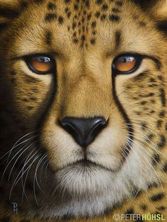 """Portrait of a Cheetah"" - 30cm x 40cm - oil on canvas."