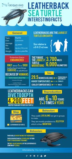 Interesting Facts about Leatherback Sea Turtle in our new #infographic