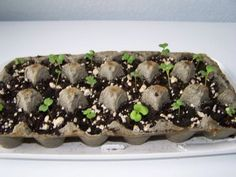 Don't throw out your egg cartons or save them for a friend that gardens, perfect container for starting seedlings
