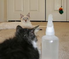 1000 Images About How 2 Keep Pets Off Furniture On Pinterest Furniture Skin Problems And Cats