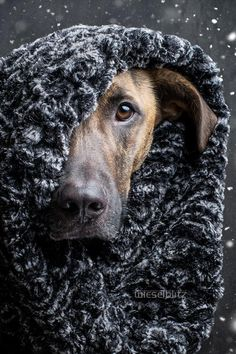 Photograph Winter is coming by Elke Vogelsang on Big Dogs, I Love Dogs, Cute Dogs, Dogs And Puppies, Doggies, Beautiful Dogs, Animals Beautiful, Cute Animals, Amor Animal