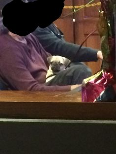 I work security for a casino and this man brought his pug in. It won't stop looking at me and I can't deal! http://ift.tt/2nhavjP