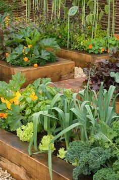 Beautiful raised beds/leeks and lettuce...while adding other flowers and growth around?